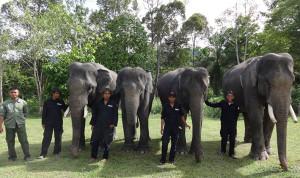 Gajah patroli YLI