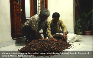 kakao untuk dijual