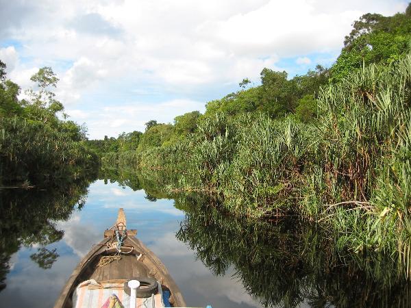 81-WG- Pristine peatswamp forest in Berbak National Park (Sumatra)