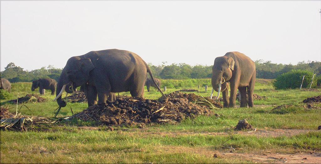 Gajah Way Kambas