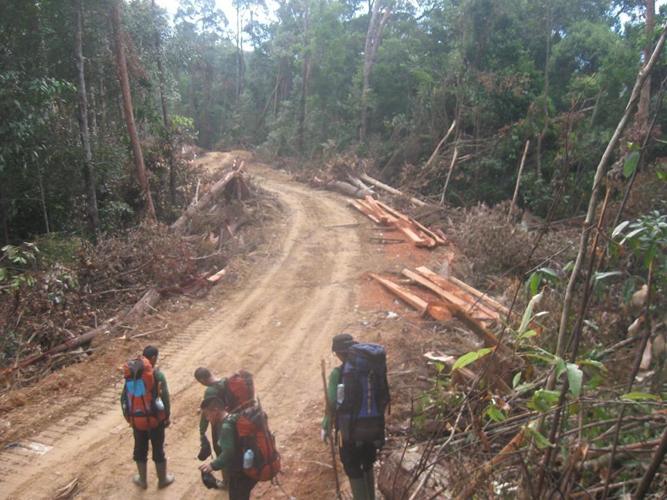 Jalan pembalakan liar yang ditemukan Tim Patroli Pada Bulan Mei 2013 di Wilayah HL dan TNKS solok selatan