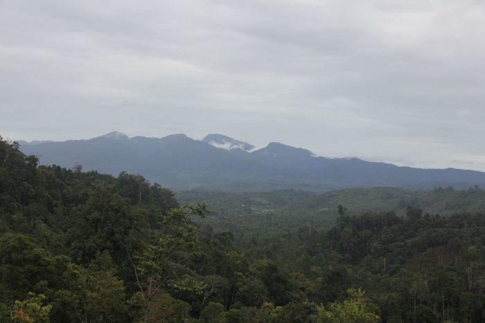 Bentang alam Taman Nasional Kerinci Seblat, berbatasan dengan lokasi tersebut para petani dampingan Akar Network membudidayakan kopi mereka.