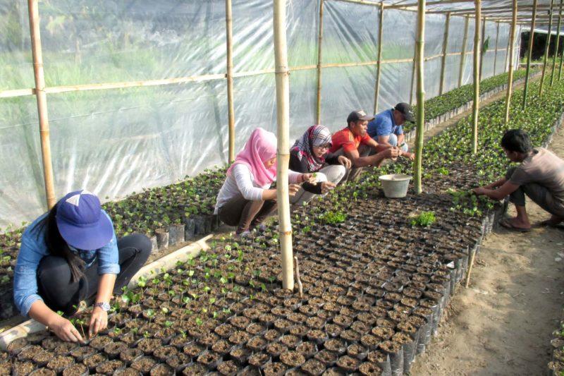 Pendampingan petani untuk pembibitan kopi oleh SRI