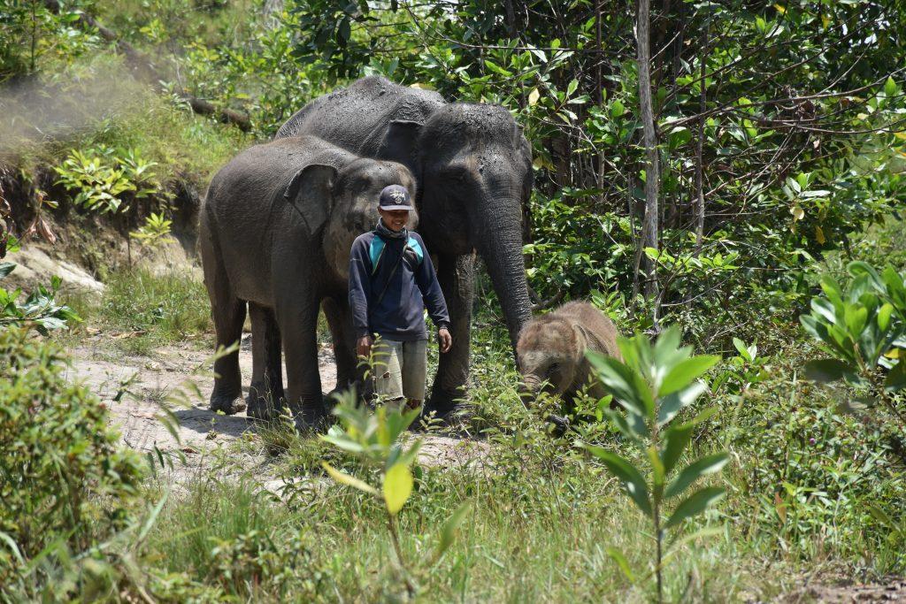 Para gajah penghuni BNWS bersama mahoutnya. Dokter hewan dari Vesswic atau BNWS rutin melakukan pengecekan kondisi kesehatan gajah-gajah jinak tersebut.