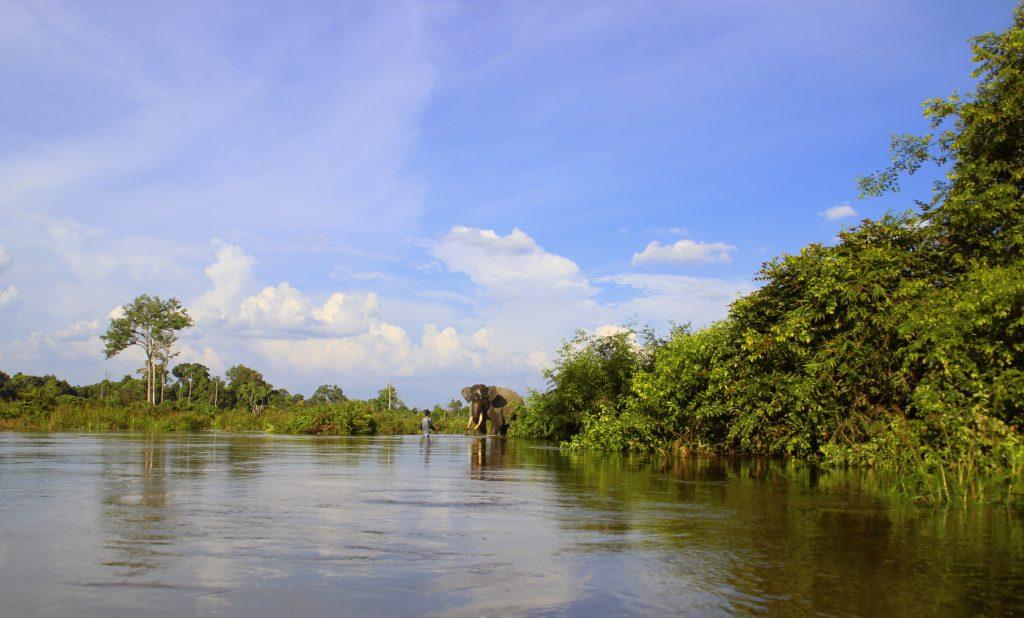 Seorang Mahout sedang melatih gajahnya di sekitar kawasan Bentang alam Taman Nasional Tesso Nilo.