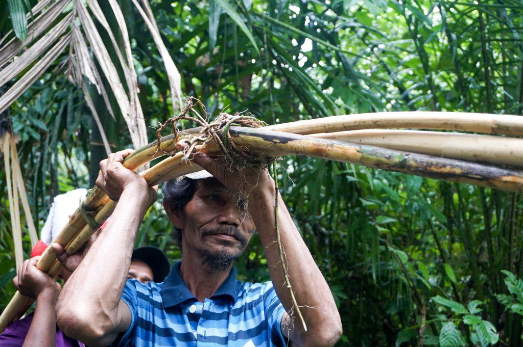 Warga sedang memanen rotan mereka. Rotan merupakan komoditas HKm yang menjadi sumber pendapatan alternatif masyarakat.