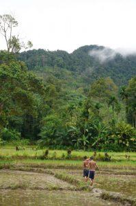 Hamparan persawahan di Dusun Napasingkam