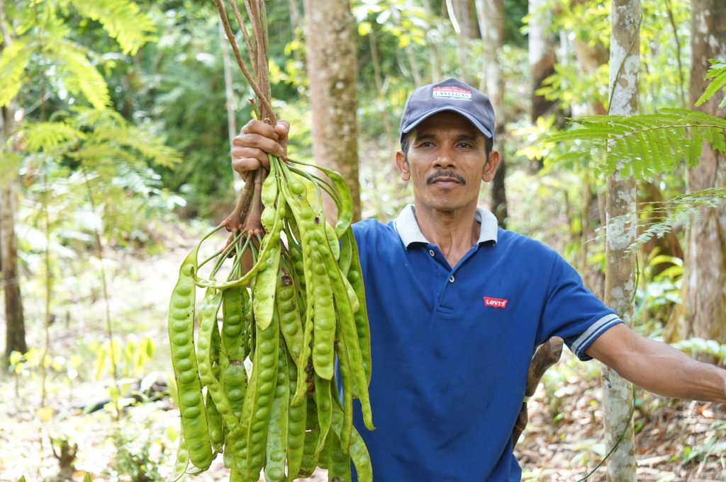 Warga Napasingkam panen petai dari lahan HKm-nya. Petai menjadi salah satu Hasil Hutan bukan kayu (HHBK) yang dimanfaatkan warga untuk menambah added value dari lahannya.