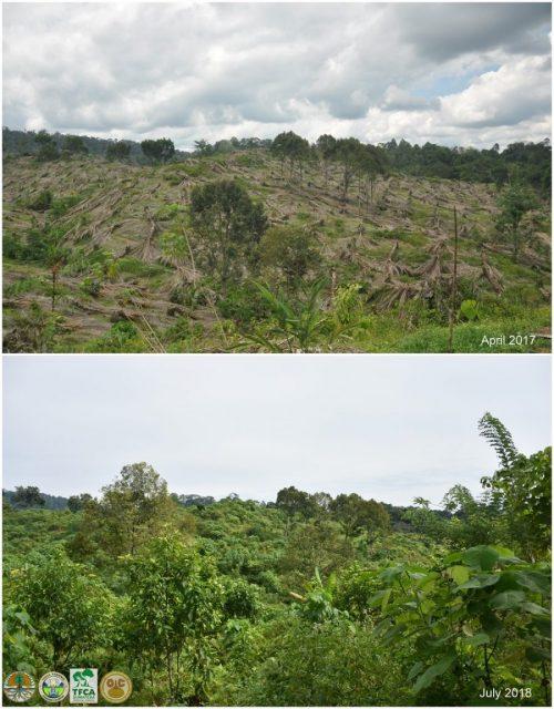 Perubahan tutupan lahan restorasi Cinta Raja 3, diukur rentang 1 tahun.