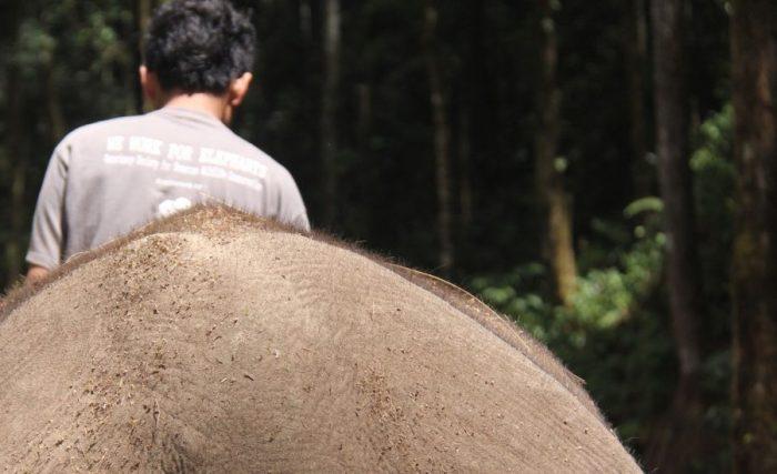 COP elephant